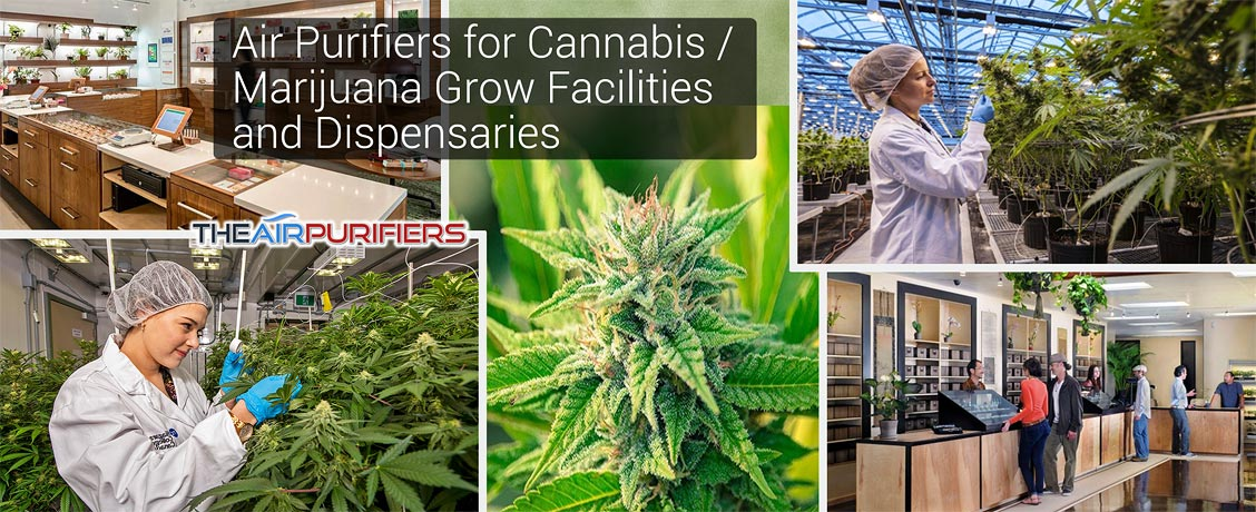 Air Purifiers for Cannabis Marijuana Grow Facilities and Dispensaries
