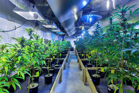 Marijuana Grow Carbon Dioxide Exposure